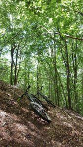 gabriella bosco