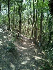 boschetto trail