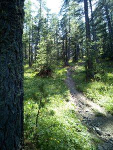 trail dh